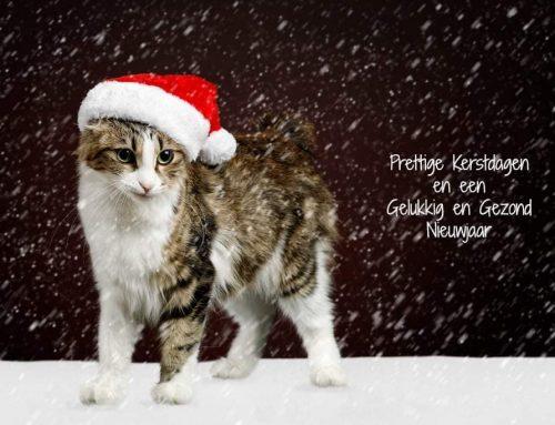 CatVision wenst u een fijne kerst