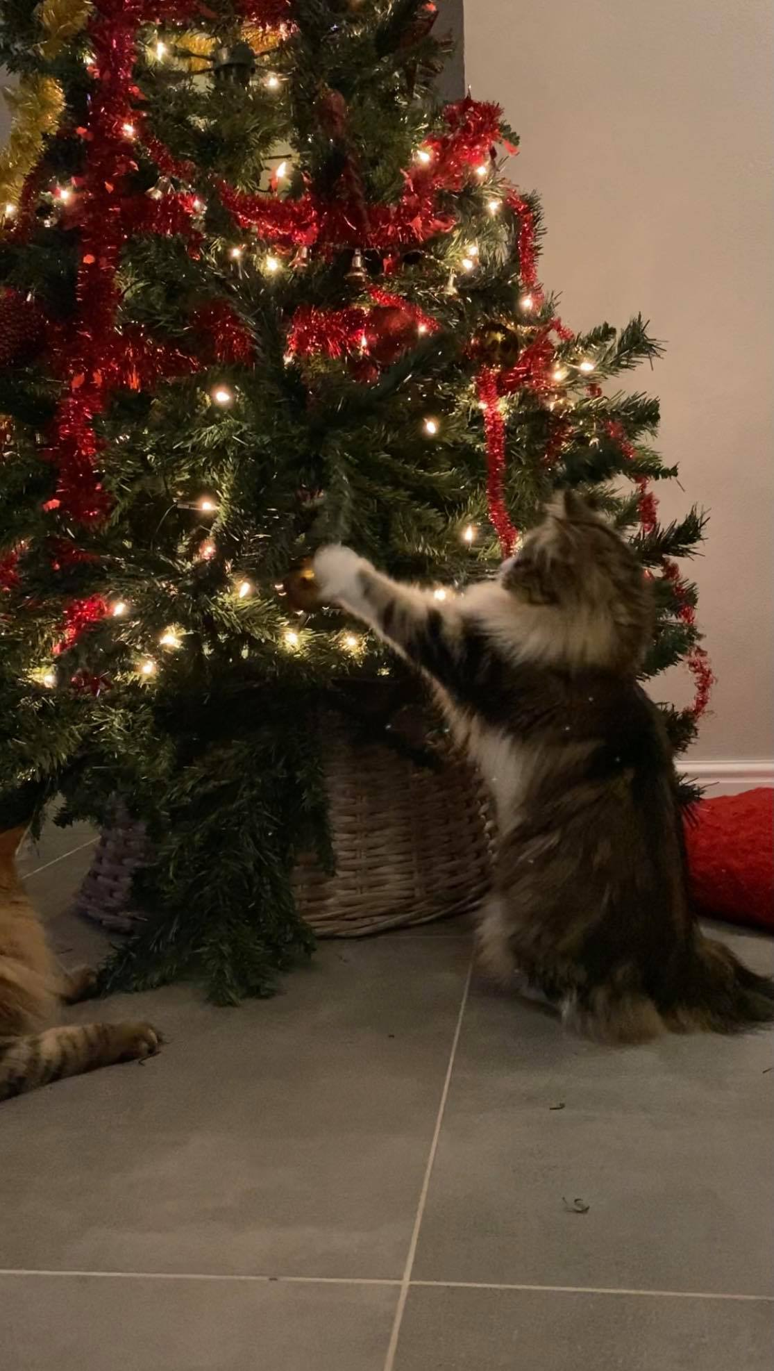 Cattery kerst