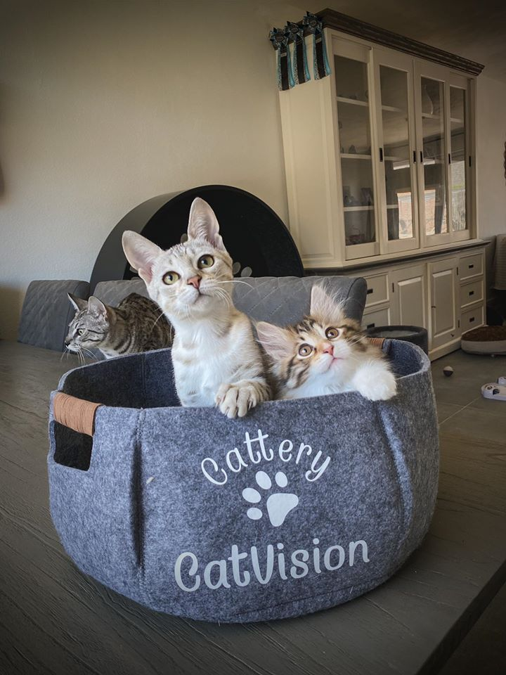 Cattery CatVision