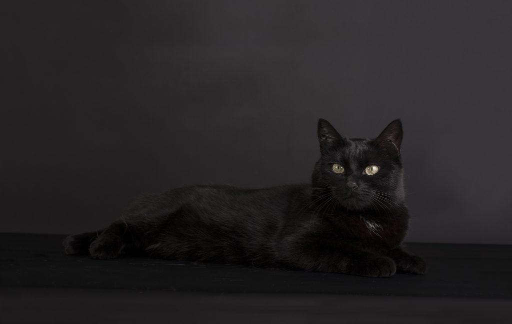 CatVision huiskat