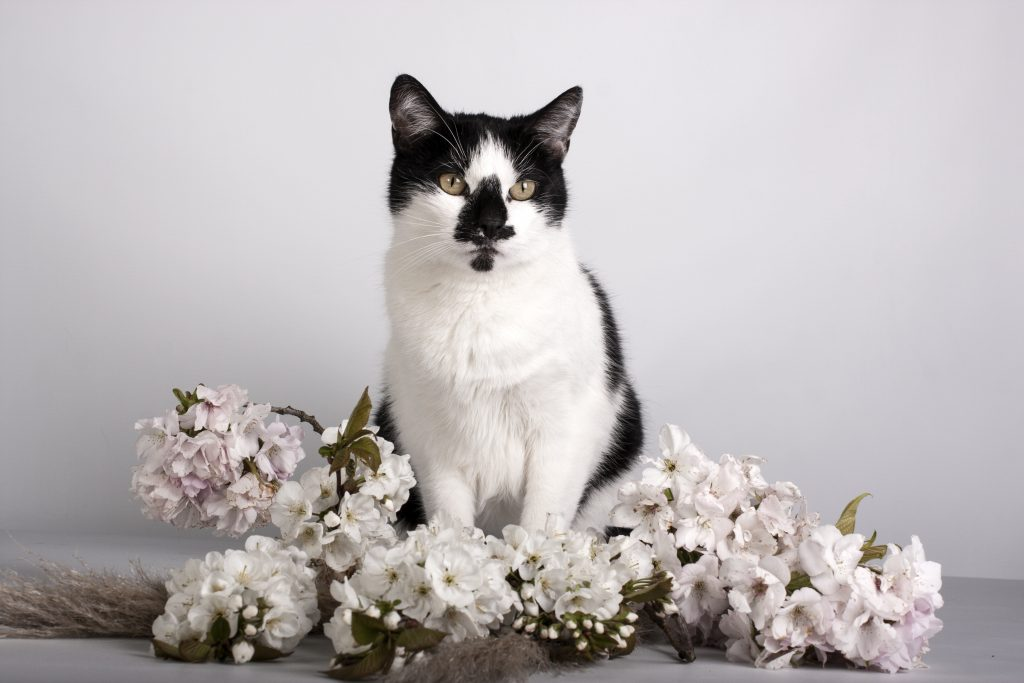 Huiskat catvision