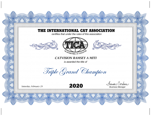 CatVision Ramsey A Miti is Triple Grand Champion