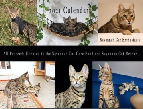 Savannah kalender