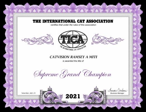 CatVision Ramsey A Miti is Supreme Grand Champion